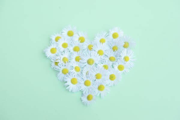 Daisy Photograph - Little Daisy by Poppy Thomas-hill