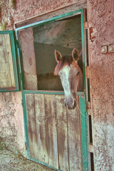 Photograph - Little Grey Pony by JAMART Photography