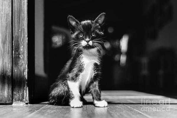 Photograph - Little Kitten, House Pet, Just Sitting On The Ground. by Joaquin Corbalan