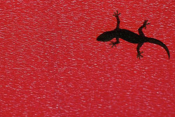 Jakarta Photograph - Little Lizard by Hidayat Mercado