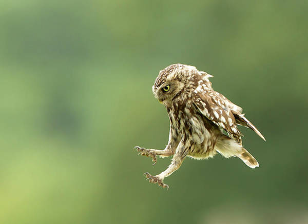 Little People Photograph - Little Owl by Kath Everitt Photography