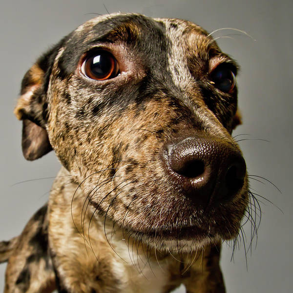 Curiosity Photograph - Little Pup by Square Dog Photography
