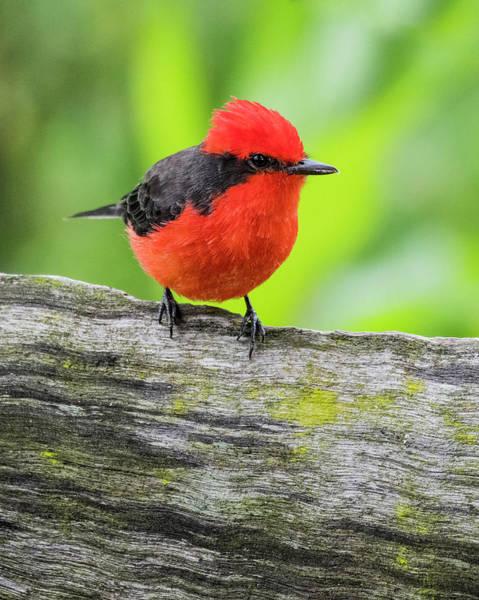Wall Art - Photograph - Little Red Bird by Shane Walters
