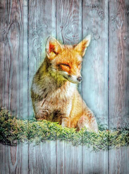 Digital Art - Little Red Fox With Wood Texture by Debra and Dave Vanderlaan