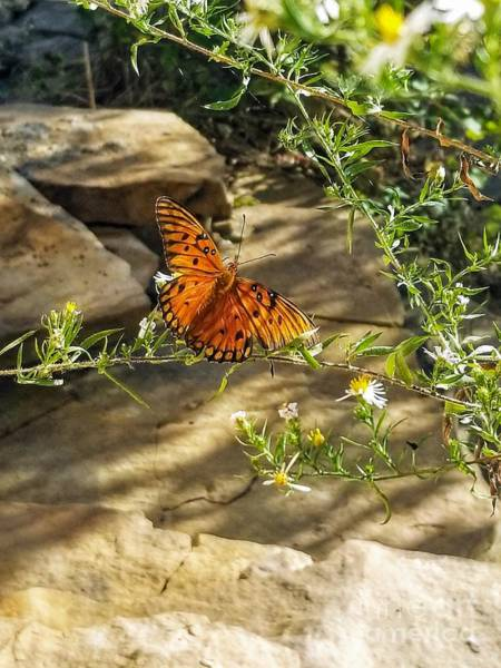 Photograph - Little River Canyon Butterfly  by Rachel Hannah