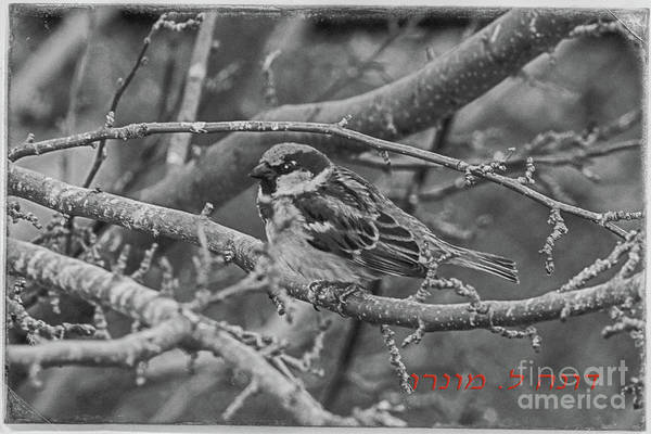 Photograph - Little Sparrow B And W by Donna L Munro
