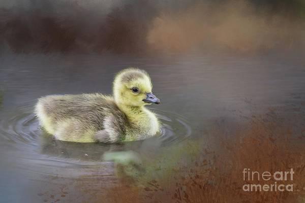 Photograph - Little Swimmer by Eva Lechner