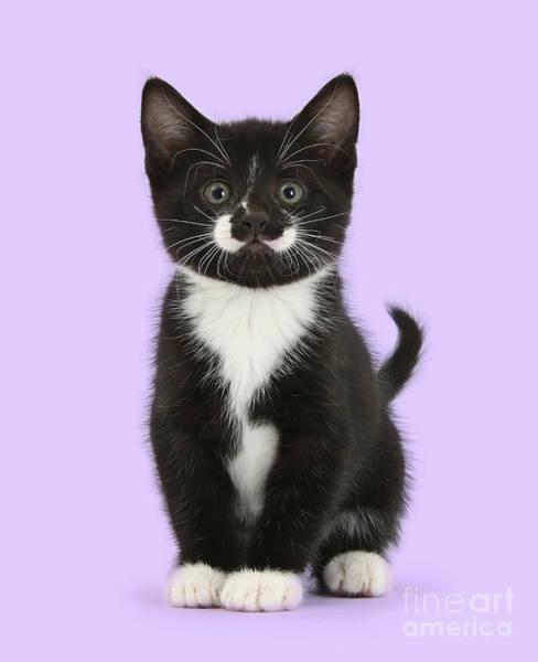 Photograph - Little Tuxedo Kit by Warren Photographic