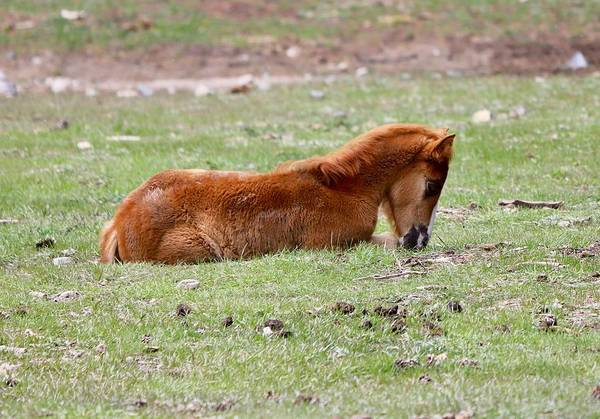 Photograph - Little Wild One by Sagittarius Viking