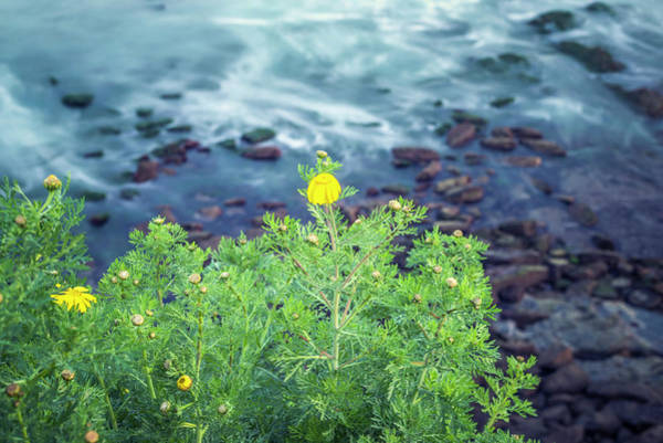 Wall Art - Photograph - Little Yellow Beauties Above The Sea by Joseph S Giacalone
