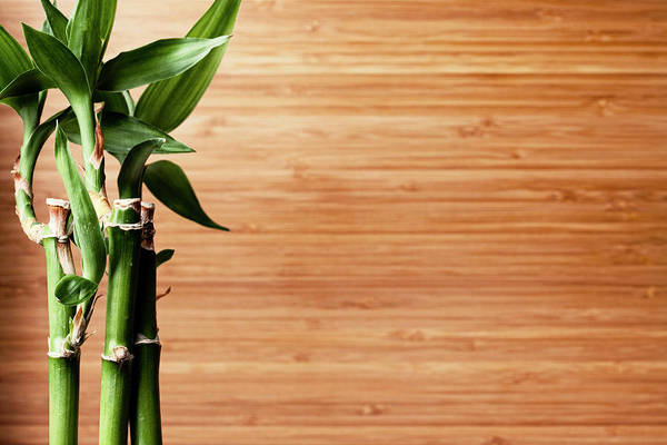 Bamboo Photograph - Live Bamboo Plant And Bamboo Board by Jill Fromer