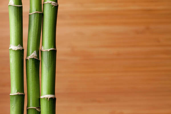Bamboo Photograph - Live Bambooplant On Bamboo Board by Jill Fromer