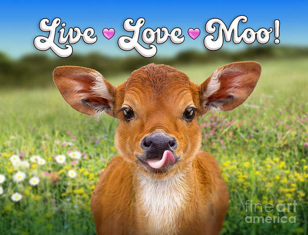 Wall Art - Digital Art - Live Love Moo by Evie Cook
