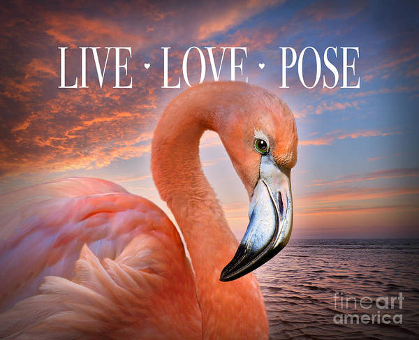 Coral Digital Art - Live Love Pose Flamingo by Evie Cook