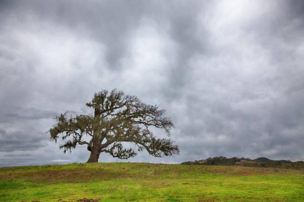 Coast Live Oak Photograph - Live Oak, Hdr Image by Alvis Upitis