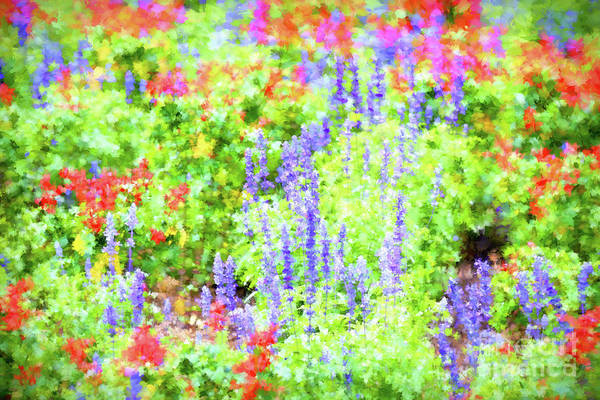 Photograph - Live Out Loud - Colorful Floral Art by Kerri Farley