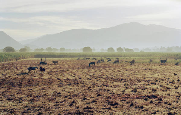 Greater Antilles Photograph - Livestock On A Farm Land Near Jacmel by Cultura Exclusive/philip Lee Harvey