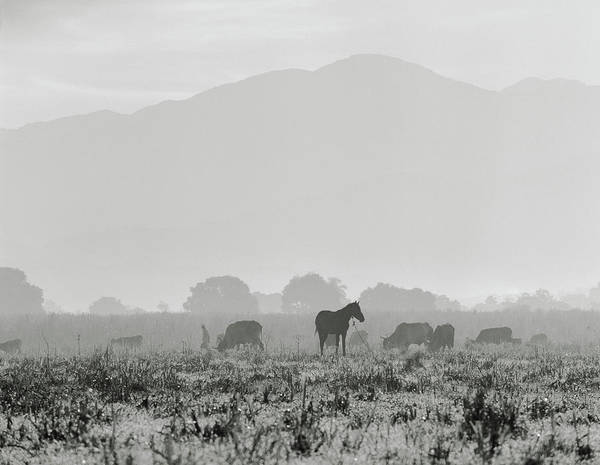 Greater Antilles Photograph - Livestock On Farm Land Near Jacmel by Cultura Exclusive/philip Lee Harvey