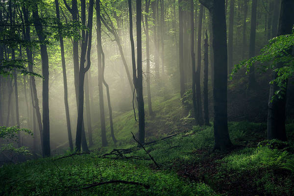 Photograph - Living Forest by Evgeni Dinev