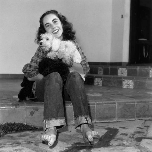 Poodle Photograph - Liz Just Relaxing by Hulton Archive