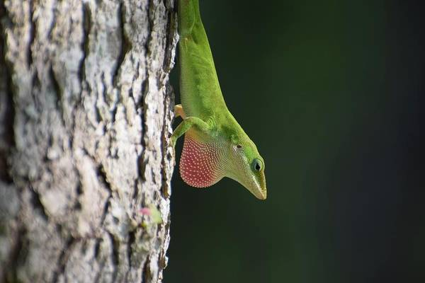 Wall Art - Photograph - Lizard by Amber Foote
