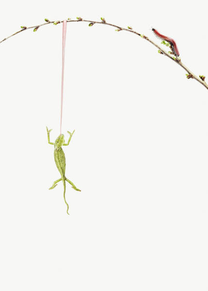 Hanging Photograph - Lizard Chameleon Hanging On A Branch by Maarten Wouters