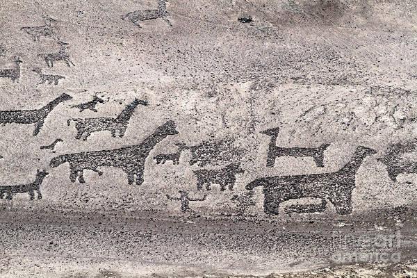 Photograph - Llama Geoglyphs Tiliviche Chile by James Brunker