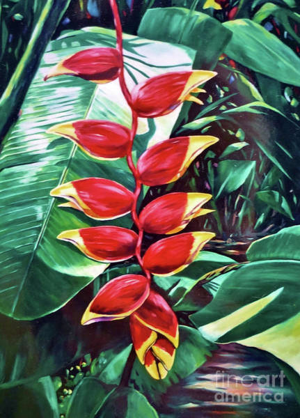 Tobago Wall Art - Painting - Lobster Claw Heliconia by John Clark