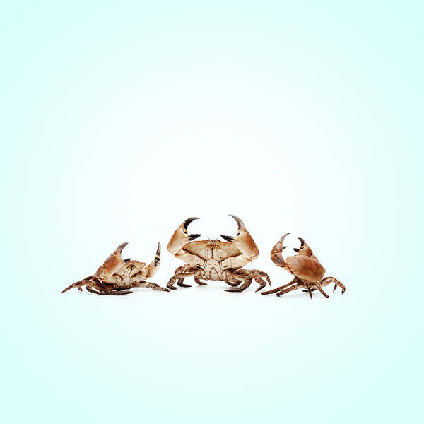 Wall Art - Photograph - Lobstermayhem Catch-me-if-you-can by Maarten Wouters