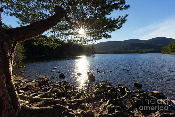 Photograph - Loch An Eilein, Scotland by Arterra Picture Library