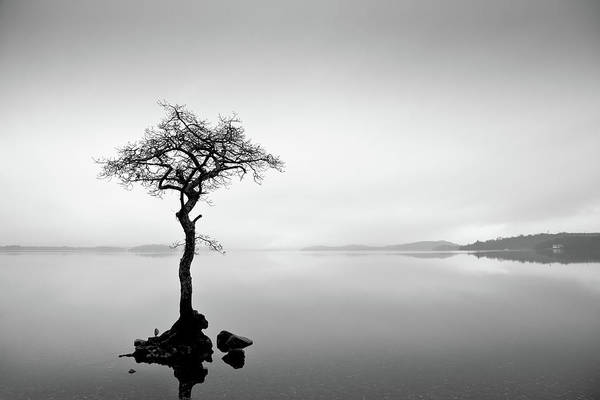 The Trossachs Wall Art - Photograph - Loch Lomond Tree by Billy Currie Photography