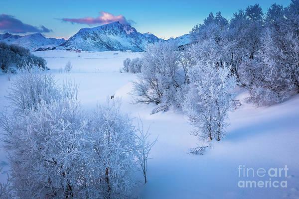 Wall Art - Photograph - Lofoten White Morning by Inge Johnsson