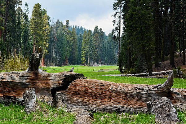 Photograph - Log Meadow Fallen Giant by Kyle Hanson