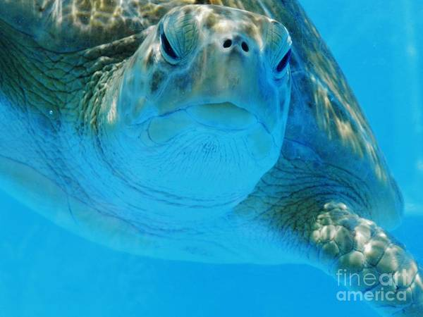 Wall Art - Photograph - Loggerhead Turtle by Snapshot Studio