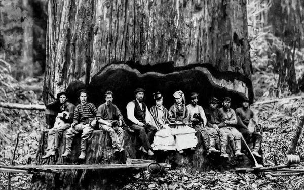 Wall Art - Photograph - Loggers, Ladies And  Dogs In Undercut C. 1880 by Daniel Hagerman