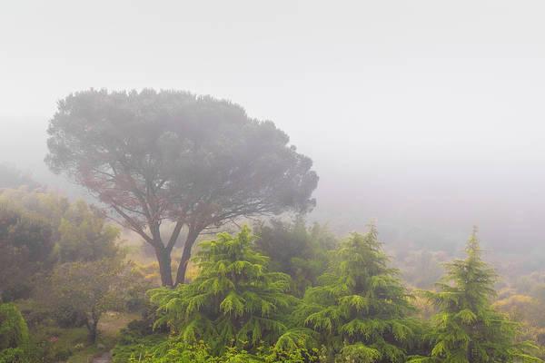 Wall Art - Photograph - Loire Valley Morning Fog by Joseph Smith