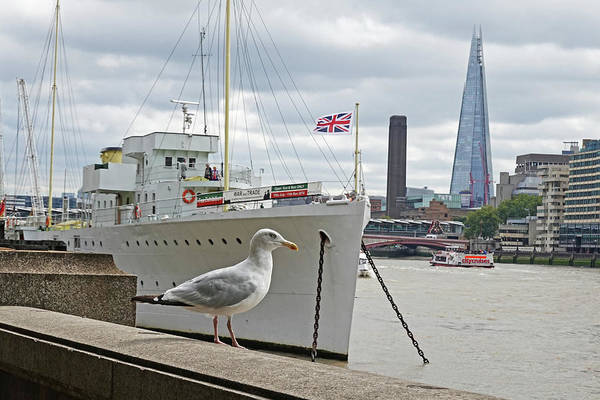 Photograph - London Seagull On The Thames River London Uk United Kingdom by Toby McGuire