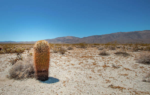 Photograph - Lone Barrel Cactus by Mark Duehmig