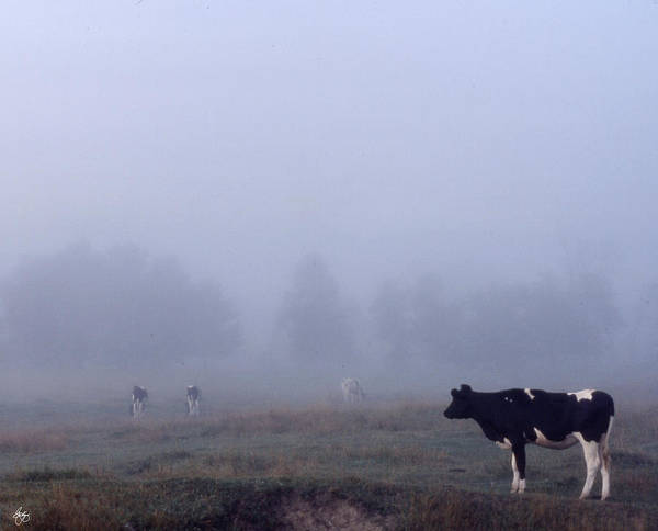 Photograph - Lone Cow In The Fog by Wayne King