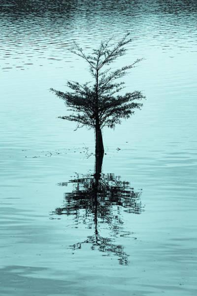 Wall Art - Photograph - Lone Cypress Cyanotype by Mary Ann Artz