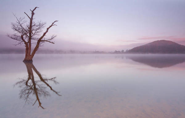 Ullswater Photograph - Lone Dead Tree In The Lake by Anita Nicholson
