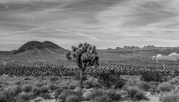 Wall Art - Photograph - Lone Joshua Tree - Pleasant Valley Bw Alt Crop by Peter Tellone