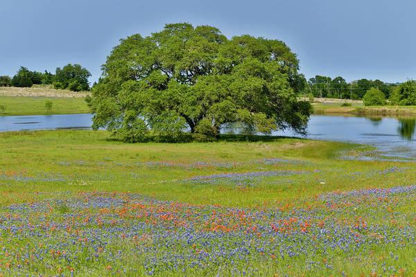 Wall Art - Photograph - Lone Oak Tree Along A Small Pond by Darrell Gulin