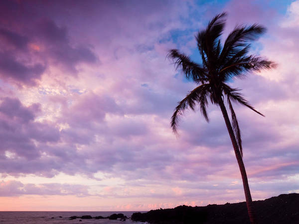 Photograph - Lone Palm Sunset by Christopher Johnson