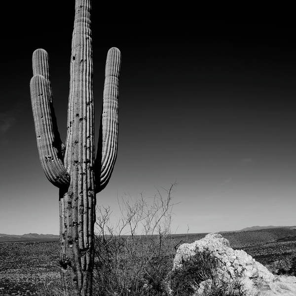 Photograph - Lone Saguaro Square by Chad Dutson