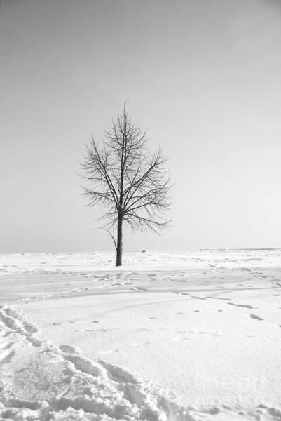 Wall Art - Photograph - Lone Sentinel by David Bearden