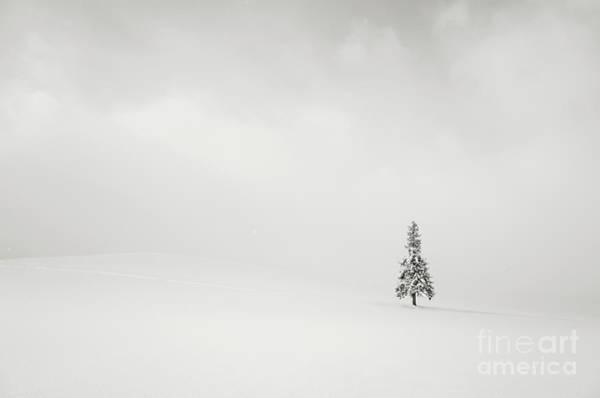 Scenery Photograph - Lone Spruce Tree In Winter Landscape by Kazuya Nakazawa