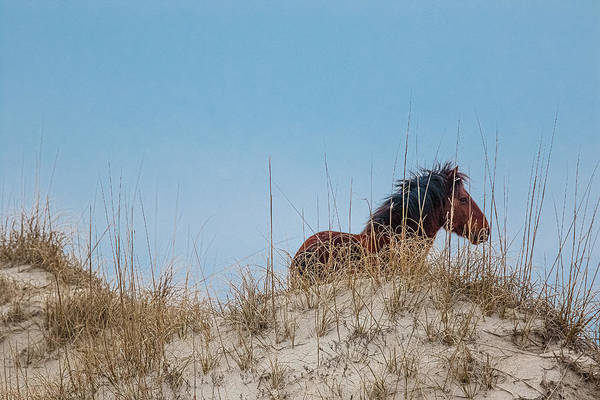 Photograph - Lone Stallion by Pete Federico