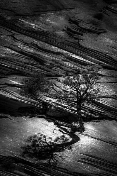 Photograph - Lone Survivor  by Roy Nelson