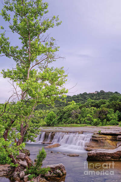 Wall Art - Photograph - Lone Sycamore Contemplation At Link Falls - Bull Creek Greenbelt Austin Texas Hill Country by Silvio Ligutti
